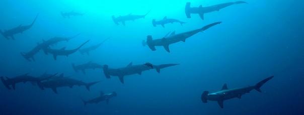 Careful in that ocean, guys.  (Image: Ryan Espanto)